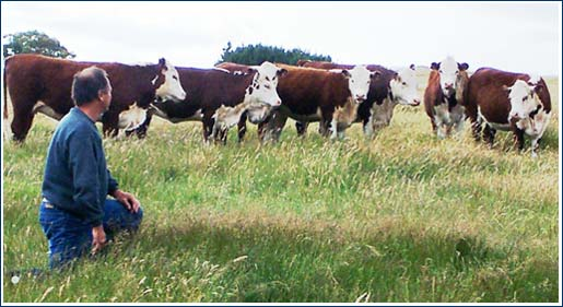 Rex with Heifers
